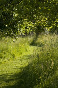 A mown path through the summer meadow grass in the Orchard at Sissinghurst Castle Garden, near Cranbrook, Kent