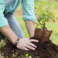 Arbor Day is about planting trees, but it's also about planning for the future. Friday, April is Arbor Day. Make your Arbor Day tree-planting a success by choosing the right tree for the right.