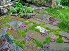 Use of Groundcovers in Patios