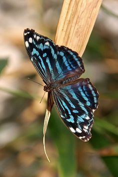 Simply Gorgeous Butterfly!