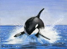 Orca Slash in Pastels by Boo. Love the movement!