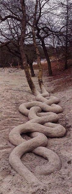 Incredible serpentine tree roots by Andy Goldsworthy. Andy Goldsworthy is a… Art Et Nature, Nature Tree, Nature Artwork, Land Art, Art Environnemental, Weird Trees, Unique Trees, Tree Roots, Tree Forest