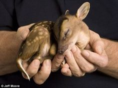 Tiny Deer Born - Care2 News Network