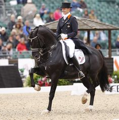 #Dressage #caballo #kisakiclub #horse #black #negro #passage #adiestramiento #cute #hermoso #discipline #disciplina #cavalo