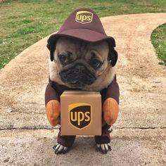 United #pug Service http://ift.tt/2sx13xE