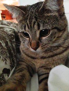 What a cute little cat!