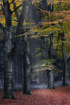 Autumn Blues by Carine Hengst on Fivehundredpx