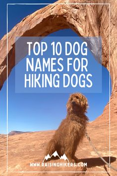 Naming a new pup? Plan to raise an outdoorsy dog who will hit the hiking trails with you? Check out these mountain lover dog names for the outdoorsy dog! We named our Labradoodle, Jasper, after Jasper National Park. See the other names that were on our list! #dognames #labradoodles #hikingdogs Hiking Dogs, Hiking Trails, Strong Dog Names, Top Dog Names, North Cascades National Park, Family Adventure, Mountain Dogs, Family Dogs, Cool Names