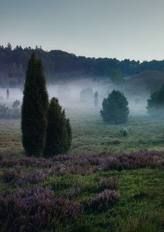 Ein mystisches Tal mitten im Naturschutzgebiet: der Totengrund in der Lüneburger Heide, der vermutlich in der Eiszeit entstand.