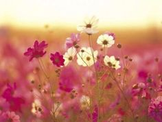 Love the soft colours Soft Colors, Colours, Gifs Lindos, Framing Canvas Art, Natural Wonders, Nature Pictures, Pretty Flowers, Mother Nature, Planting Flowers