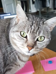 Dog Cat, Friends, Cats, Animals, Life, Gatos, Animais, Amigos, Animales