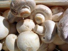 Six Steps to Mushroom Farming « Fresh Mushrooms