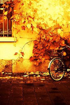 Go take me for a bike ride in the cold crisp air of fall where my hair get tangled in between our bodies