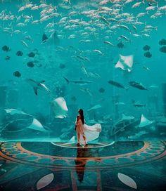 Undewater aquarium in Dubai! Tag someone you would explore with . Atlantis The Palm, Dubai, United Arab Emirates . Dubai Vacation, Dubai Travel, Dubai Resorts, Places To Travel, Travel Destinations, Places To Visit, Travel Trip, Atlantis, Foto Dubai