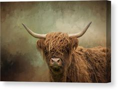 This beautiful Highland Cow on Canvas features a close-up portrait of a long-haired Scottish Highland Cow, with long horns and a woolly brown coat. Refined with an impressionist fine art texture. Perfect for your living room, office or hotel room wall. #highlandcow Highland Cow Painting, Highland Cow Canvas, Highland Cow Art, Scottish Highland Cow, Highland Cattle, Scottish Highlands, Stretched Canvas Prints, Canvas Art Prints, Diana