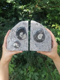 Large Orthoceras Fossil Bookends, Crystal Decor, Home Decor Gifts, Book Lover Gift, Fossils Deco, Book Room Decor, Book Holder Large Crystals, Natural Crystals, Stones And Crystals, Septarian Stone, Fertility Crystals, Crystal Aesthetic, Book Holders, Sound Healing, Crystal Decor