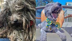 La spectaculaire transformation de Theo, petit chien abandonné de tous