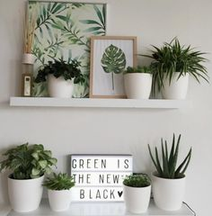 Going Green - Greenery & Indoor plants