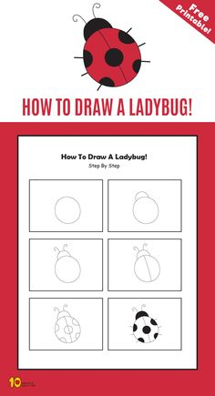 How To Draw a Ladybug step by step for kids