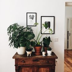 my scandinavian home: plants in the lovely, relaxed home of Berlin DIY blogger Laetitia Delorme.