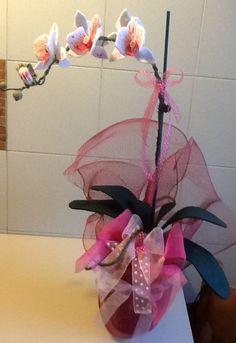 Orchidea  pannolenci Salvato  da D'Eugenio Maria