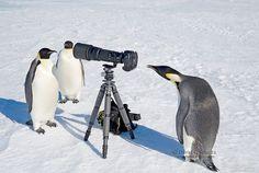 25 fotos de animais que pensam que são fotógrafos