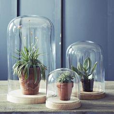 6 manieren om een glazen stolp in te richten