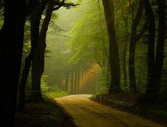 misty woodland lane