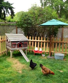 Cute picket fence and umbrella aound the girls's coop.