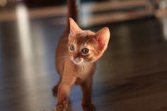 Walking, Cats, Animals, Beautiful, Instagram, Gatos, Animais, Animales, Kitty Cats