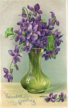 Sweet Violet - Bing images                                                                                                                                                      More
