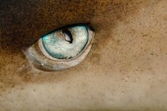 White Tip Shark eye, CLOSE UP! If my cousin saw this...she'd freak.