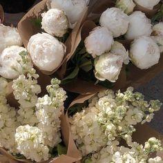Beige Aesthetic, Flower Aesthetic, Summer Aesthetic, Bloom, Rosa Rose, No Rain, Deco Floral, Design Blog, Jolie Photo