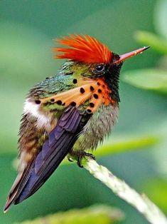 beautiful birds, butterflies and flowers - Community - Google+