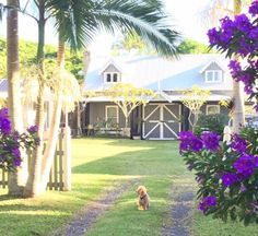"""Check out this awesome listing on Airbnb: """"A Bay Cottage"""" - Houses for Rent in Byron Bay"""