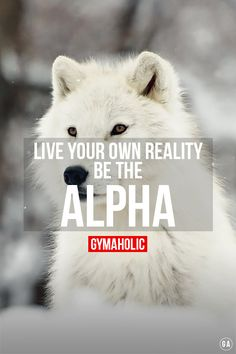 Fuck what people think of you. Live your own reality ! http://www.gymaholic.co #fit #fitness #fitblr #fitspo #moitvation #gym #gymaholic #workouts #nutrition #supplements