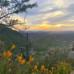 Classic Arizona Road Trip: Phoenix To Sedona - TravelAwaits Family Vacation Destinations, Cruise Vacation, Disney Vacations, Family Vacations, Family Travel, Road Trip Essentials, Road Trip Hacks, Road Trips, Black Canyon City
