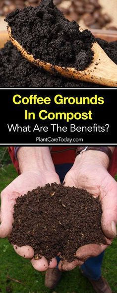 Coffee Grounds In Compost What Are The Benefits Compost Soil Coffee Grounds Compost