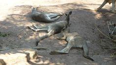 Känguru: Bohr ist das HEIß!!!!!