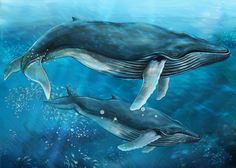 Find Whale stock images in HD and millions of other royalty-free stock photos, illustrations and vectors in the Shutterstock collection. Whale Drawing, Whale Painting, Blue Whale Pictures, Whale Illustration, Save The Whales, Watercolor Fish, Ocean Wallpaper, Whale Art, Ocean Creatures