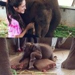 Cutest baby elephant ever!