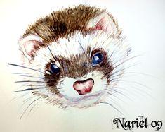 Ferret water.color by MissNariel on DeviantArt