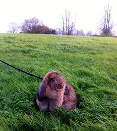 Bunny roams the Irish countryside - May 15, 2012