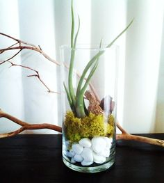 use a glass cylinder vase to make a stunning display with rocks, moss and an air plant                                                                                                                                                      More