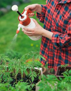 There is a natural non-toxic pesticide for your garden! Learn how to naturally care for your organic garden by using neem oil on your garden and vegetable plants and flowers as a natural and non-toxic pesticide for your home! Hydroponic Gardening, Hydroponics, Organic Gardening, Gardening Tips, Urban Gardening, Vegetable Gardening, Plant Pests, Garden Pests, Garden Insects