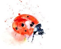 Contemporary print of my original watercolour lady bird Printed using epson Chroma K3 pigments onto archival