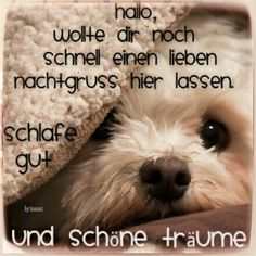 Guten Abend Gute Nacht Bilder – You are in the right place about Texte types Here we offer you the most beautiful pictures about the Texte posts you are looking for. When you examine the Guten Abend Gute Nacht Bilder – part of the picture … Good Night, Good Morning, German Quotes, Night Pictures, Picture Sharing, Night Wishes, Maternity Pictures, Inner Peace, Animals And Pets