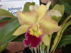 Minha orquídea!!!!!!