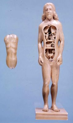 Anatomical manikin 3    France, Germany and Italy, ca. 1500-1700. Carved ivory    Image Courtesy of the Alabama Museum of the Health Sciences, The University of Alabama at Birmingham    These manikins, between 6 to 7 inches in length, were made from solid pieces of ivory. The arms were carved separately and are moveable. The thoracic and abdominal walls can be removed, revealing the viscera.