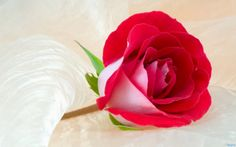 Puisi Menyambut Hari Valentine 2014